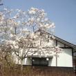 やっと桜が咲きました・ノラ猫のその後