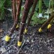 梅雨の庭と菜園