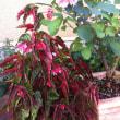 この植物の名前は?