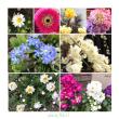 最近撮ったお花のまとめ <3> <4>