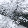 2月2日  雪の朝