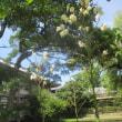 高田本山の花と休憩