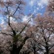 東信の春・桜編