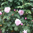 バラシーズン始まる