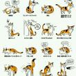 猫の行動、仕草表