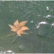 冬の池@MoonFish