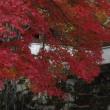 紅葉を見に...④