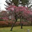 京都御苑の桃林と梅林