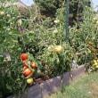 なぜJah Masonは鉈をもちトマトを収穫するのか?