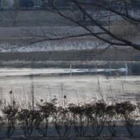 白鳥の・・・・・沼
