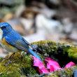 幸せの青い鳥を求めて!