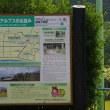 新潟県糸魚川市、青海大沢青沢神社のイチョウです!!