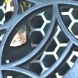 電磁波カットのドライヤー 1月21日に新登場!ゼンケン「電磁波低減ドライヤー(遠赤外線ドライヤー)」
