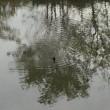 初冬の溜池