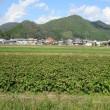 ランチは丹波篠山でいただくおひつごはん ~ あすか農房 ~