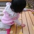 イチヨウの葉っぱみ~つけた!