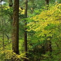 4377 癒しの森
