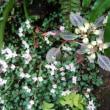 高尾の早春の花を訪ねて🌱