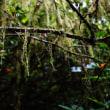 木の枝につくコケ植物