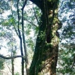 稲富神社の古木群