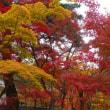永観堂禅林寺秋の紅葉