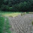稲刈り報告'17