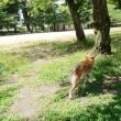 平和公園散歩 180524