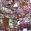 4月11日(木)・造幣局通り抜け
