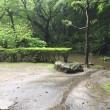 大雨の梅ヶ渕不動堂