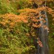 養老渓谷 滝と紅葉