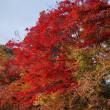 床もみじで有名な岩倉の「実相院門跡」。品格漂う庭に寄り添う錦のもみじ