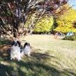 2017年秋の光が丘公園狆オフ会