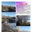 花巡り 「桜-その448」 飛鳥山公園