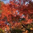 今年もキレイな紅葉☆彡