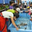 イルカ島にミニ水族館 魚や貝に触れ、好評 鳥羽の観光施設