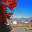 平成29年11月17日 11月12日オレンジのFJクルーザーで長野県へ紅葉狩り(紅葉狩り編)