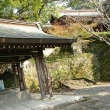 神社仏閣巡り59 菊池神社in霜月