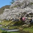 会津・観音寺川の桜まつり
