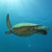 ハワイでダイビング
