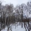 雪道で赤いナナカマドの実