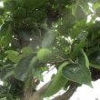 蝶や蝉からの夏便り