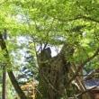会津若松市 蚕養国神社。