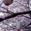 桜の花びら散る頃は。。。
