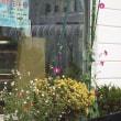 お店の前の花壇をパチリ