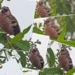 「野鳥撮影に帯広川へ-紅猿子-」について考える