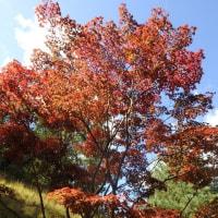 十月桜と紅葉