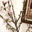 春のお花♪