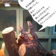 草津で出会った~エリマキトカゲとえびすさん