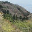 葛城山に春の妖精カタクリを求めて