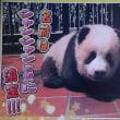 上野動物園のパンダの赤ちゃん 名前は「シャンシャン(香香)」と発表